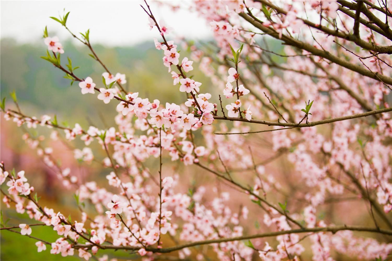 暖春来临,糖尿病患者要注意些什么呢?